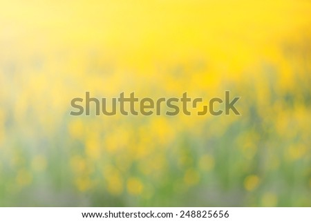 Abstract yellow flowers blurred in outdoors - stock photo