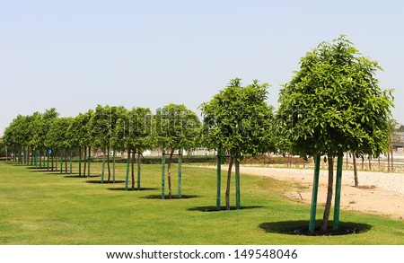 Abu Dhabi Sheikh Zayed White Mosque - tree - stock photo