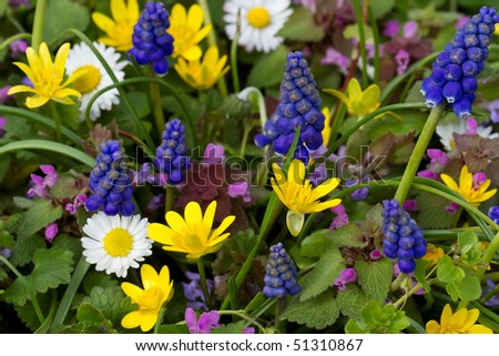 abundance of brightly colored wildflowers - stock photo