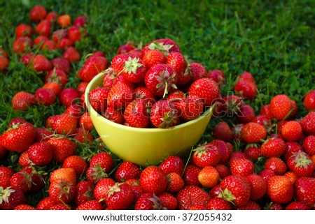 Abundance ripe organic strawberries on tableware on green grass - stock photo