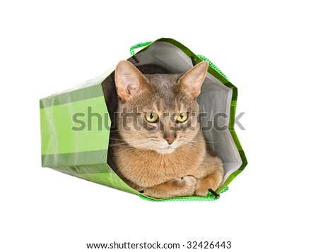 Abyssinian cat in green bag isolated on white - stock photo