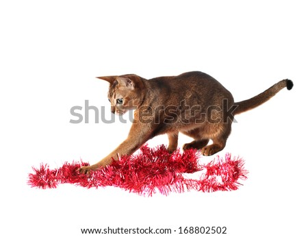 Abyssinian cat playing with tinsel - stock photo