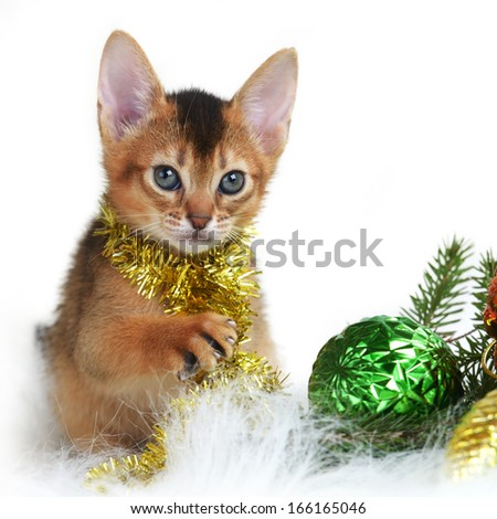 Abyssinian cute kitten with christmas balls isolated on white background