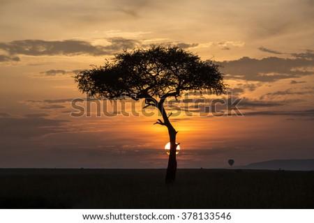 Acacia Dawn.Dawn on the Masai Mara - stock photo