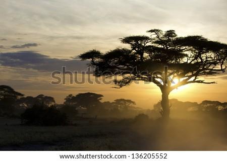 Acacia tree at sunset in Kenya 03 - stock photo