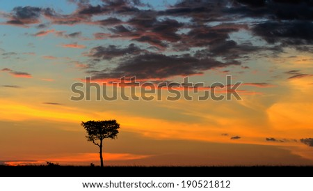Acacia tree at sunset in Mara Triangle Kenya - stock photo