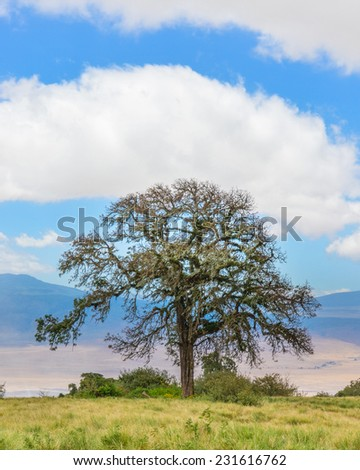 Acacia tree perched on the rim of the Ngorongoro Conservation Area crater, Arusha, Tanzania, Africa  - stock photo