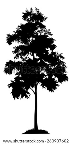Acacia tree with leaves and grass, black silhouette on white background.  - stock photo