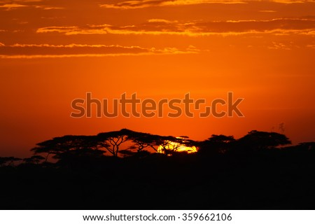 Acacia trees at the African savanna with sunrise, Serengeti national park, Tanzania. - stock photo