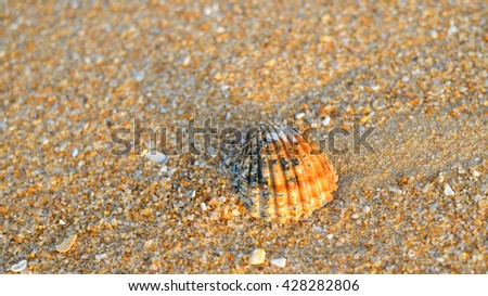 Acanthocardia tuberculata shell with sand as background, flat lay style top side view - stock photo