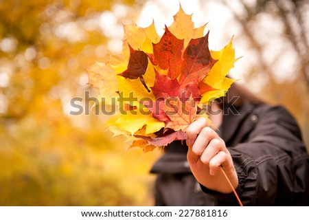 Acer autumn bunch yellow red leaves in hand, tree called maple. Man holding old dried leaves in hand, selective focus and nice circle bokeh, photo taken in Poland, late autumn season. Horizontal  - stock photo