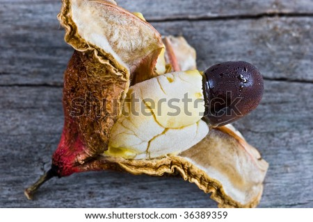 ackee is the national fruit of Jamaica and is borne in clusters on an evergreen tree - stock photo