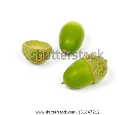 acorns isolated on white - stock photo