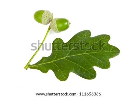 acorns with leaf - stock photo