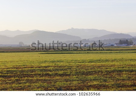 Acres of farm land as far as the eye can see in British Columbia's picturesque Fraser Valley/Early Morning in the Fraser Valley/Dawn in the Fraser Valley - stock photo