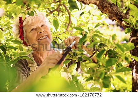 Active senior woman cutting dried buds from the tree. Elder female gardener gardening in her farm smiling - stock photo