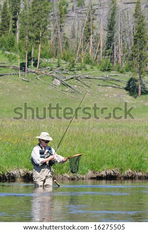 Active senior woman with a trout in her fishing net, wading the Firehole River in Yellowstone Park.