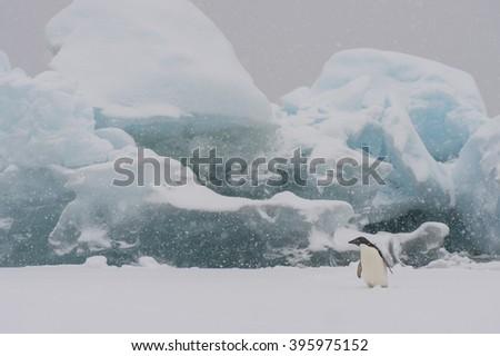 Adelie Penguin on an Iceberg - stock photo