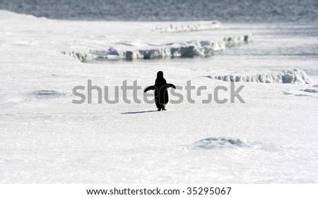 Adelie penguin (Pygoscelis adeliae) on the sea ice in the Weddell Sea, Antarctica - stock photo
