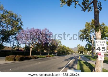 Adolfo Street with Purple Blue Jacaranda, Camarillo, Ventura county, CA - stock photo