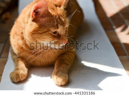 Adopt a pet. Sad and lonely cat laying on the floor. - stock photo