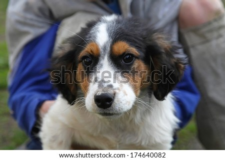 Adopted rescued adorable mixed breed puppy dog - stock photo