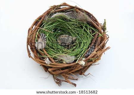 Adopted Turtle: A baby turtle in a bird's nest isolated on a white background. Adoption/infertility concept. - stock photo