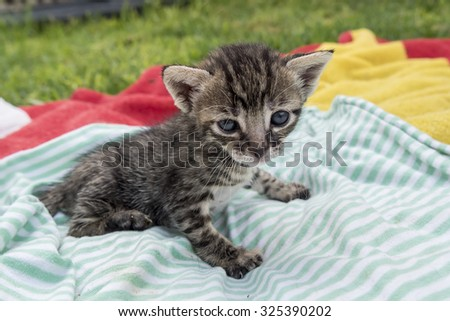 Adorable and sleepy tabby kitten - stock photo