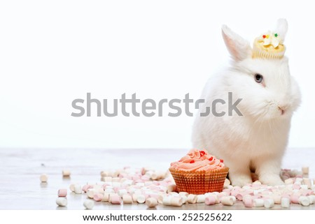 Adorable birthday gift. Closeup image of a cute white bunny sitting by the delicious cupcake and marshmallows isolated on white background with copy space - stock photo