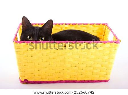Adorable black cat hiding in a yellow basket, peeking over the edge - stock photo