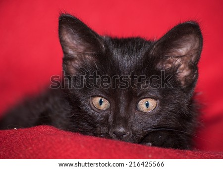 Adorable black kitten peeking, on red blanket - stock photo