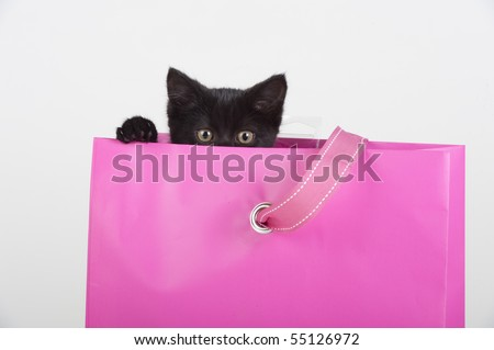 adorable black kitten peeking out of pink gift bag present - stock photo