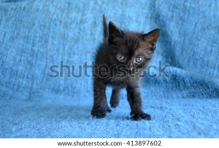 adorable black tabby kitten on blue blanket - stock photo