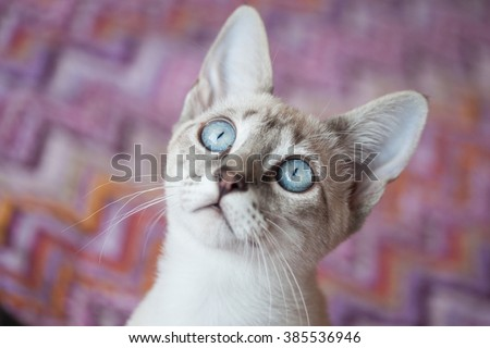 Adorable blue eyes cat with colorful background - stock photo