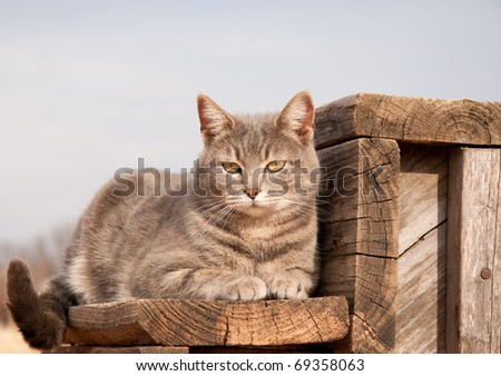 Adorable blue tabby cat resting on a wooden step against cloudy sky