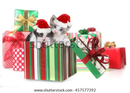 Adorable Box of Kittens as a Christmas Gift - stock photo