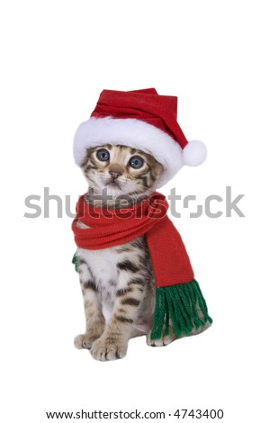 Adorable brown Christmas kitten in Santa stocking hat and scarf isolated on white - stock photo