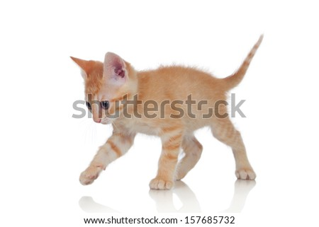 Adorable brown kitten isolated on a white background
