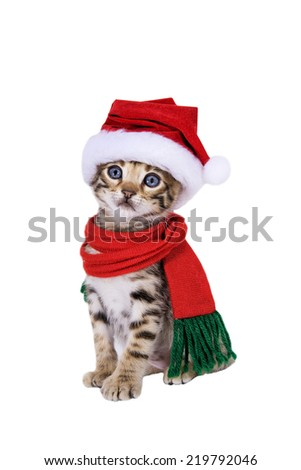 Adorable brown tabby Bengal Christmas kitten in Santa stocking hat and scarf isolated on white - stock photo