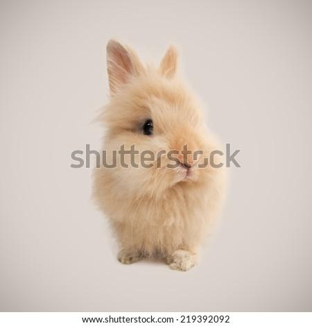 Adorable bunny on beige background - stock photo