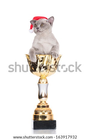 adorable burmese kitten in a santa hat - stock photo
