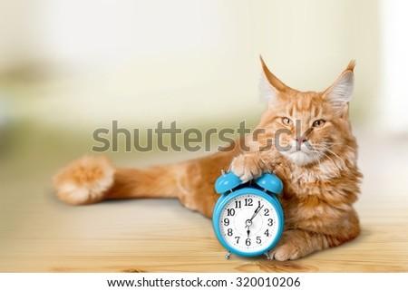 Adorable cat and alarm-clock. - stock photo