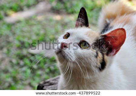 adorable Cat Staring at something - stock photo