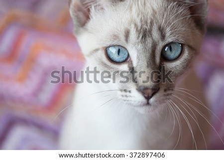 Adorable cat with blue eyes and white fur - stock photo