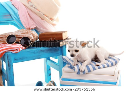 Adorable chihuahua dog and heap of different things close up - stock photo