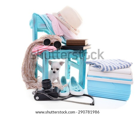 Adorable chihuahua dog and heap of different things isolated on white - stock photo