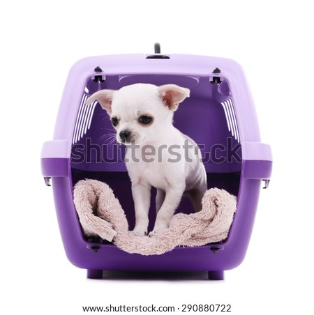 Adorable chihuahua dog in travel plastic cage isolated on white - stock photo