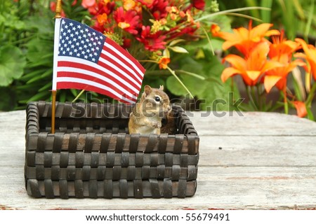 adorable chipmunk standing up for the american flag - stock photo