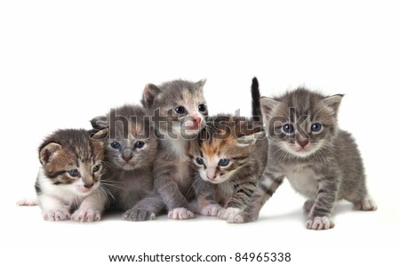 Adorable Cute Kittens on White Background - stock photo