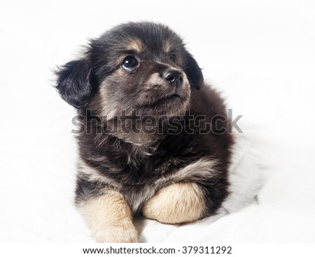 Adorable cute little puppy dog on light background. - stock photo
